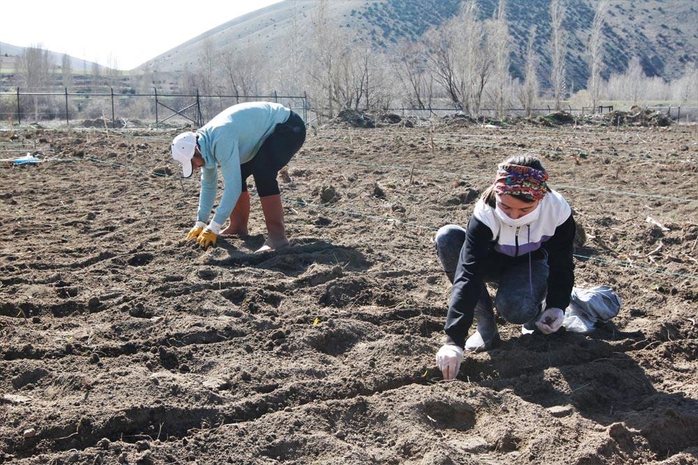 Bayburt Üniversitesi Organik Tarımdaki Ürün Çeşitliliğini Artırıyor